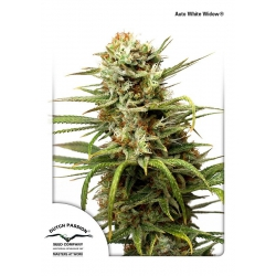 Auto White Widow Dutch Passion nasiona marihuany
